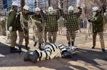 Tokyo zoo stages'zebra escape' - 9
