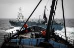 Japan keeps hunting whales - 2