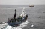 Japan keeps hunting whales - 7