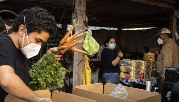 Magana Farms produce packing