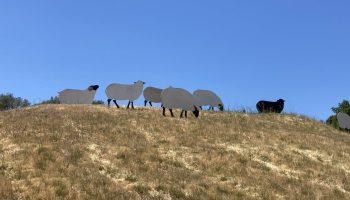 di rosa sheep