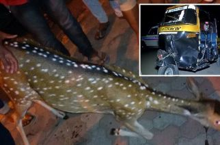 A deer was killed after being hit by an auto near Goregaon