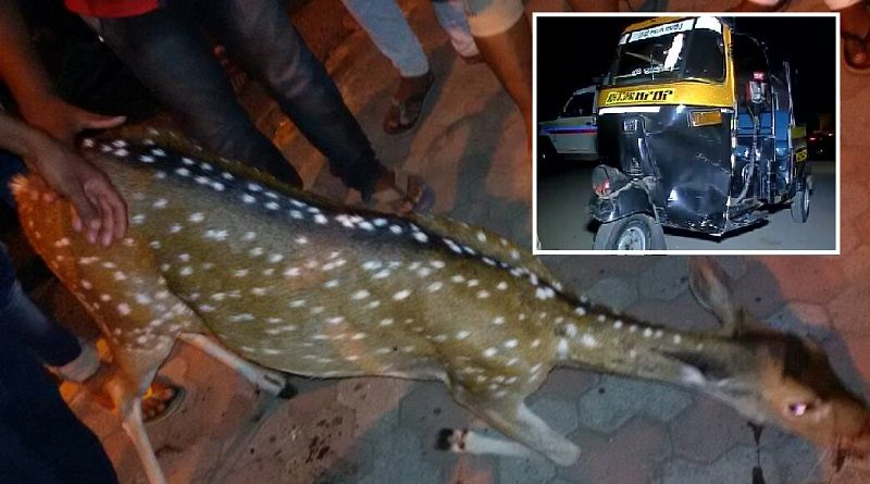 Deer strays onto highway near Goregaon, gets killed after being hit by an auto