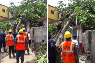 TMC officials working on removing the fallen tree at Thane's Indira Nagar. Picture Courtesy: Binu Var