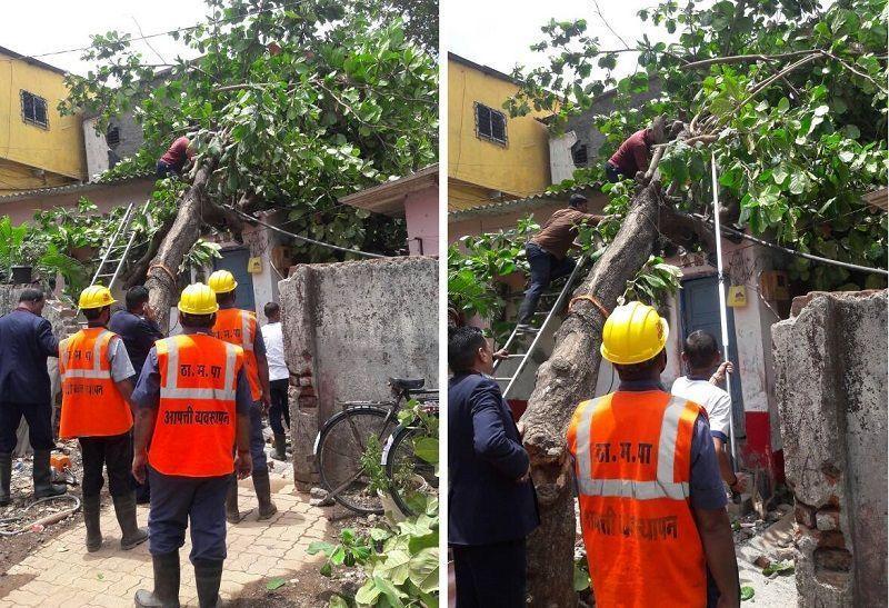Tree falls on house in Thane's Indira Nagar area, 3 women injured