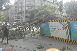 Over 5,000 trees are proposed to be cut across South Mumbai to pave way for the Colaba-Bandra-SEEPZ Metro 3 project. Picture Courtesy: Sneha Sneh