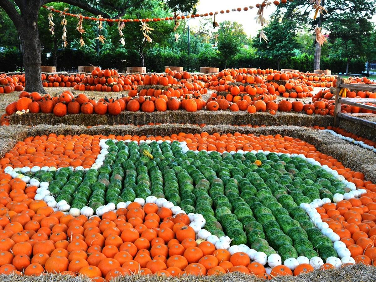 Dallas Arboretum, Pumpkin Patch