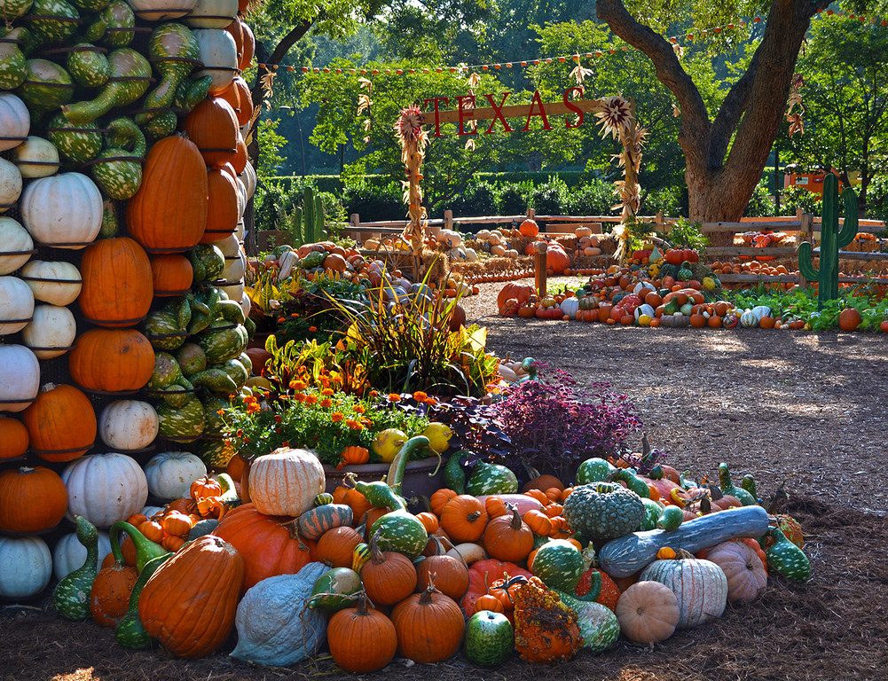 Dallas Arboretum, Pumpkin Patch