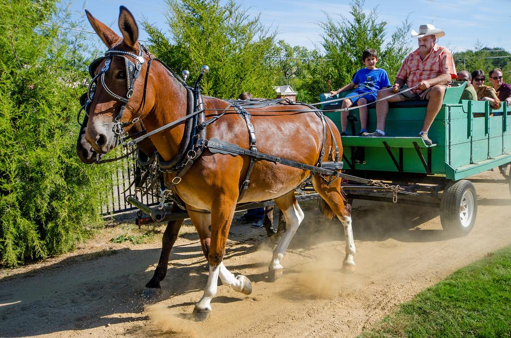 farmfest heritage farmsteag museum plano