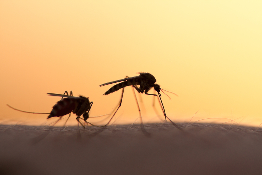 west nile mosquitos