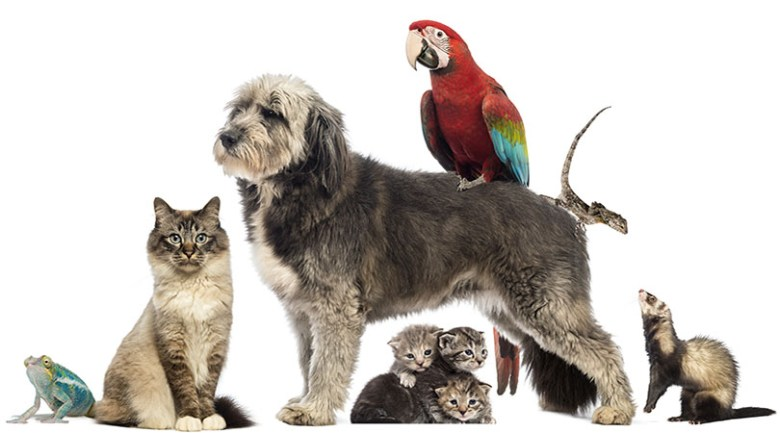 pageant of pets