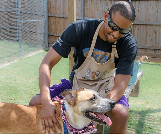 City of Plano, Animal Shelter dog