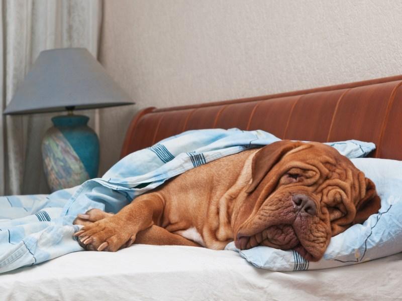 dog friendly spoil your pet plano