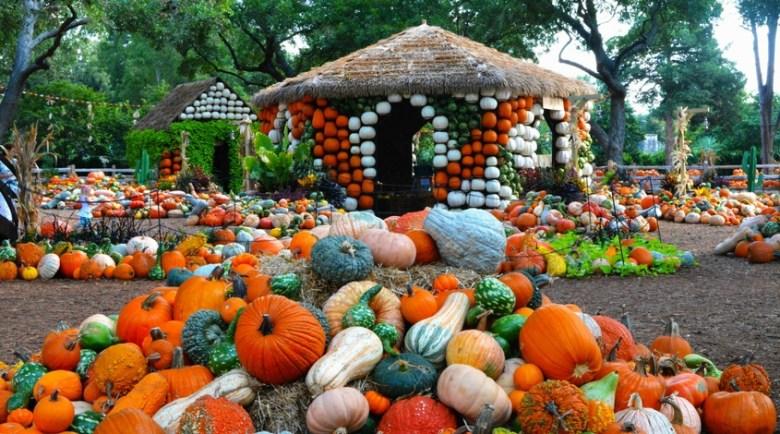 autumn at the arboretum dallas art of the pumpkin