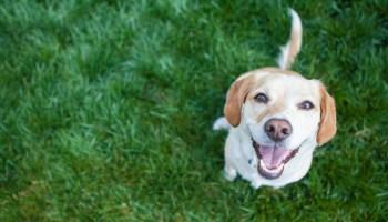 dog-pawty-three-dog-bakery-operation-kindness