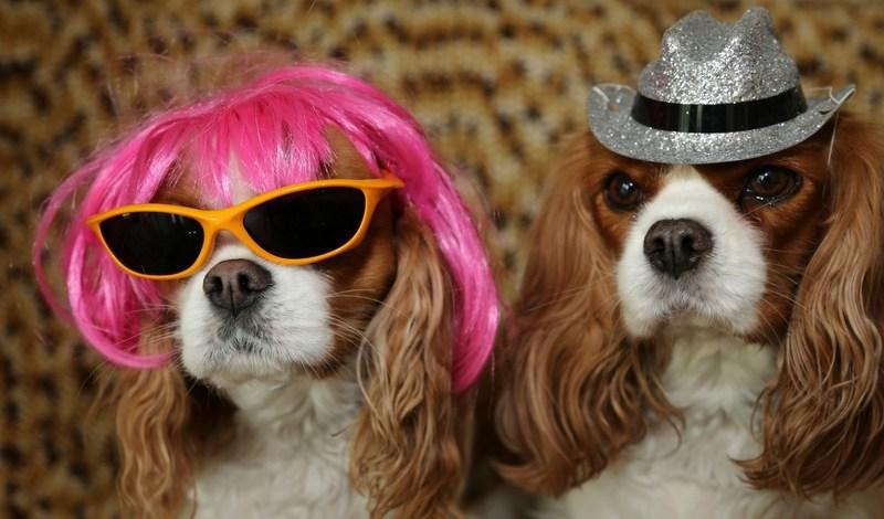 krewe-of-barkus-mckinney-dog-parade