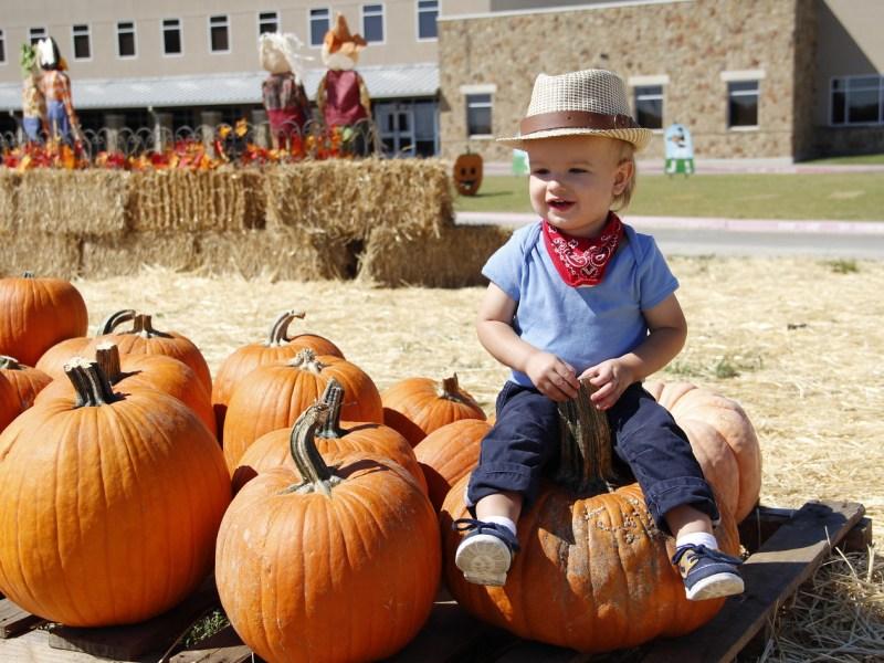 Pumpkin Patch, heritage Farmstead Museum, Plano
