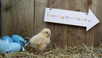 Easter Egg Hunt, Heritage Farmstead Museum, Plano
