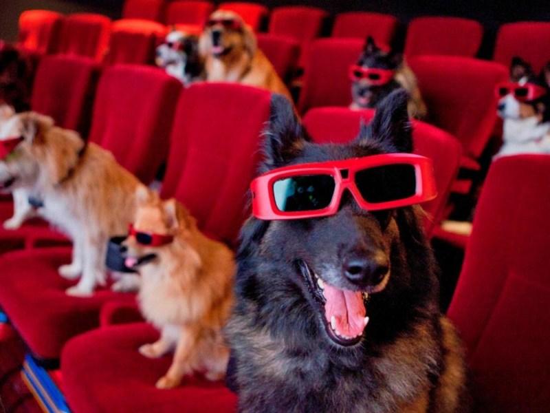 dogsinamovietheater