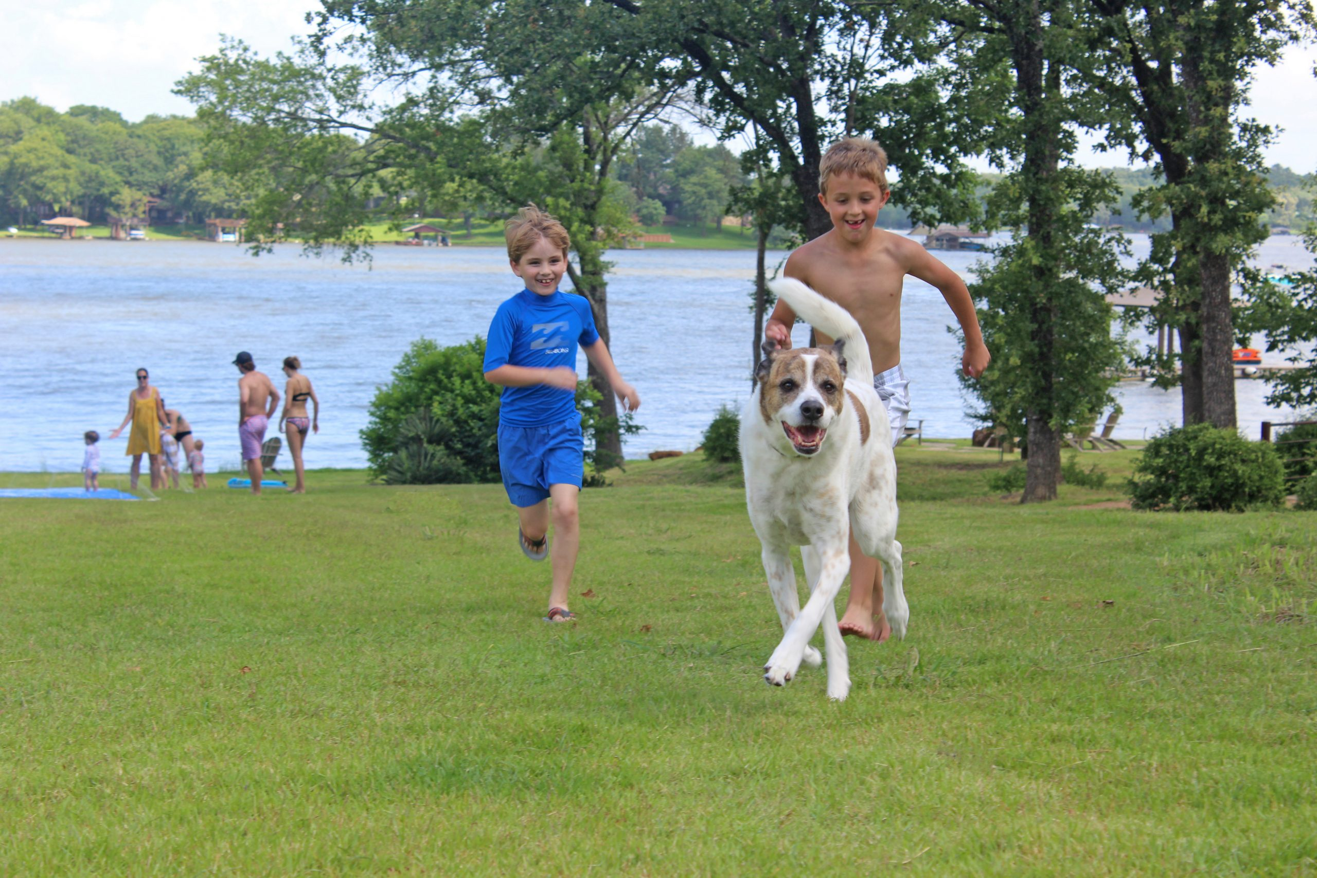 kids and dogs playing