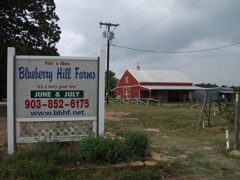 blueberry hills farm