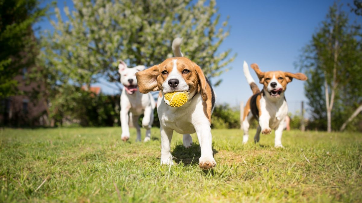 paws in the park is a wonderful thing to do this weekend to get your dog moving and meeting new friends! | shutterstock