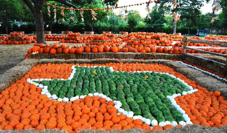 autumn at the arboretum, dallas arboretum, fall festival best things to do