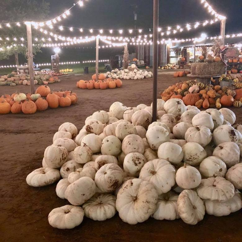 hall's pumpkin farm is one of the best local pumpkin patches!