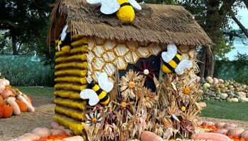 Bug out at Autumn at the Arboretum! This year's theme? Bugtopia!