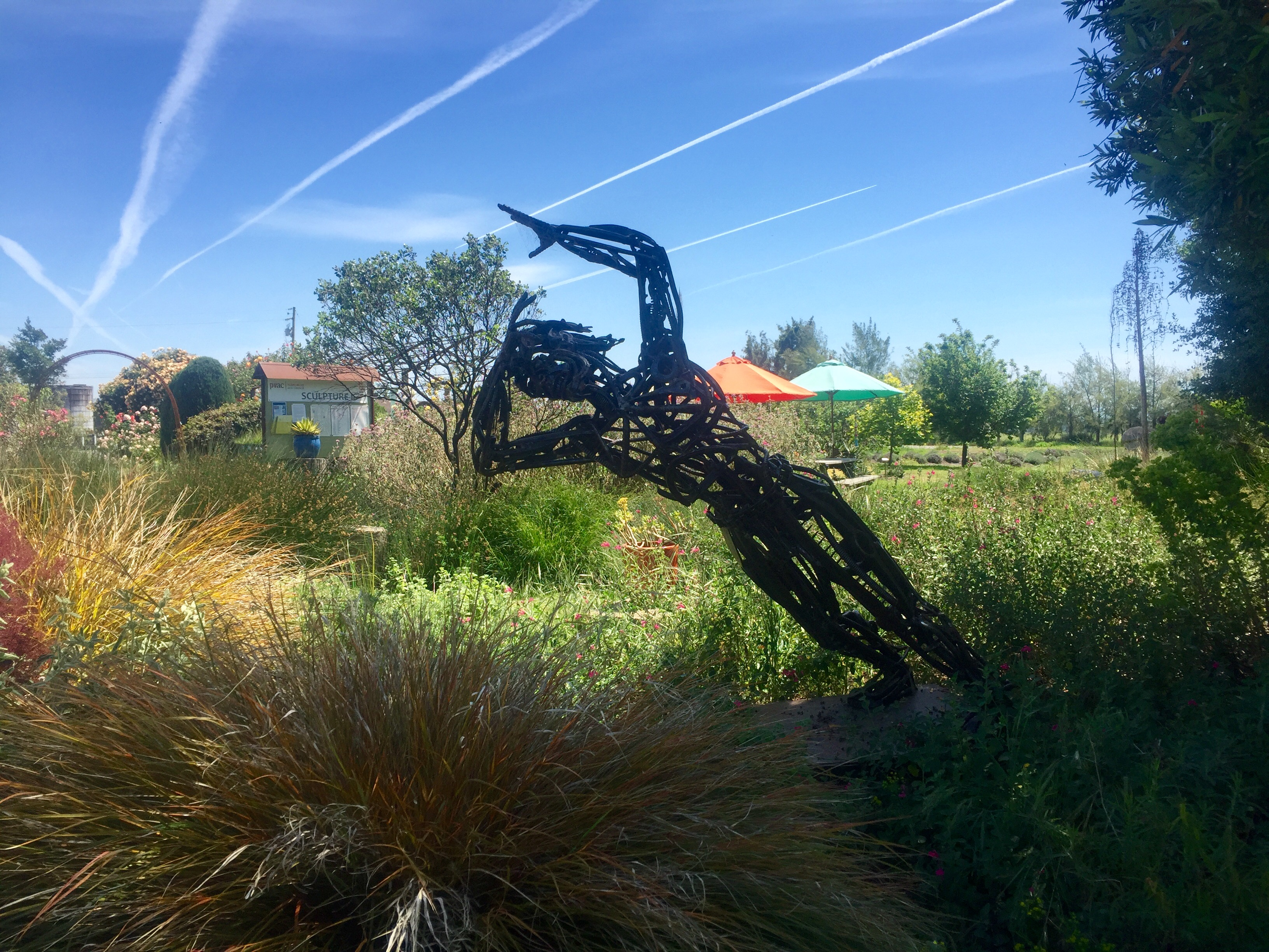 Nature and art merge at the Sierra Azul Nursery and Gardens.