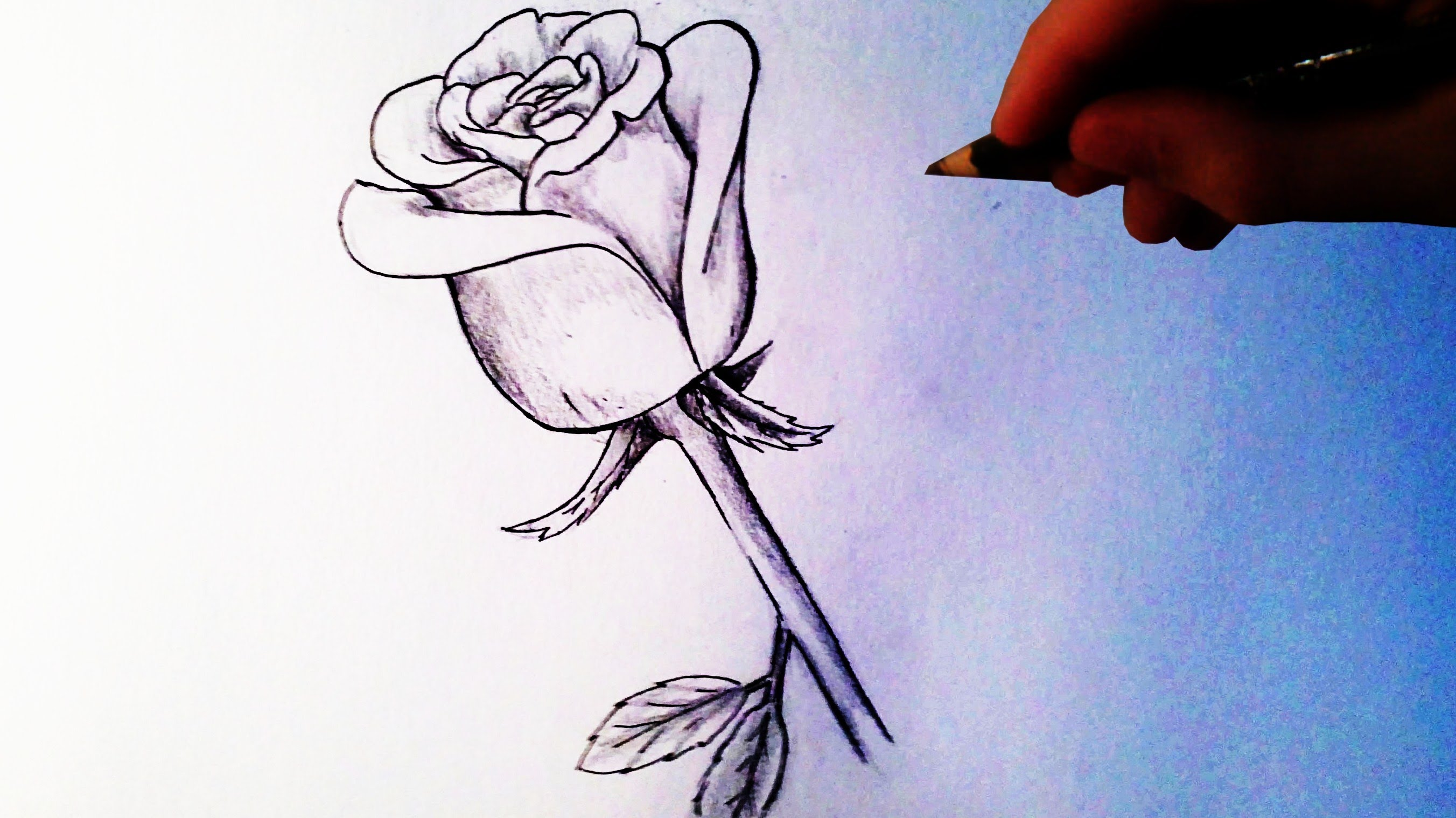 Uncategorized Drawing Video video how to draw a rose local santa cruz