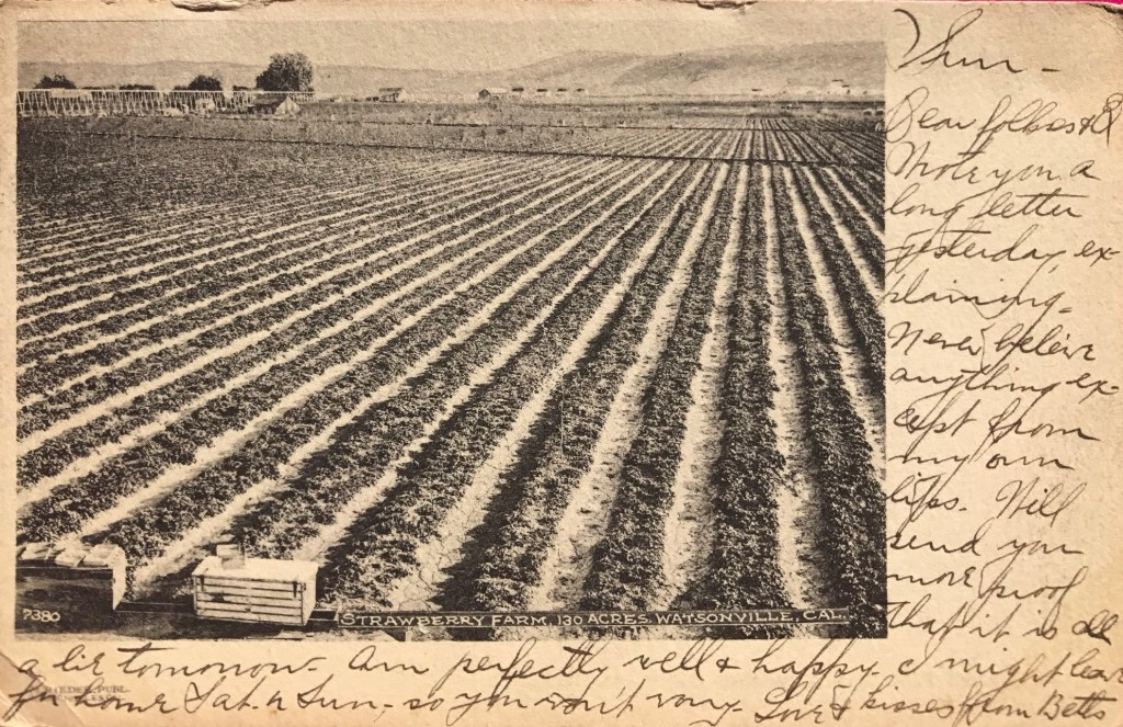 Postcard about lies from Watsonville in 1907