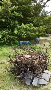 """""""The Raven and the Wolf"""", by Sharon Loper. Bronze, redwood, slate, other organic materials."""