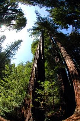 Big Basin Redwoods State Park Santa Cruz LocalWiki