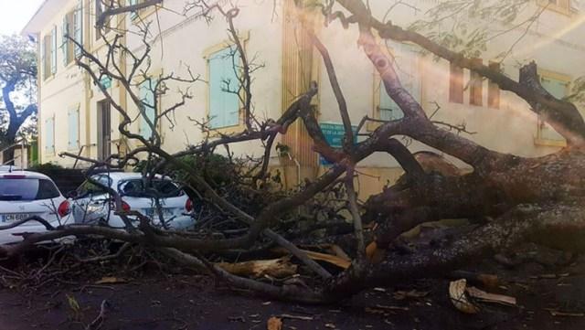arbre-tombe-stpierre-788x445
