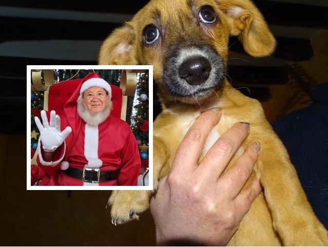 petits-innocents-reunion-chien-adoption-27