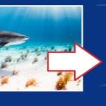 Élections Européennes : Les requins de La Réunion pourront eux aussi voter le 26 mai