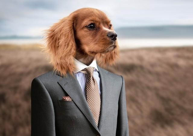dog-2467149_960_720
