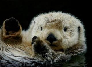 Anche le lontre restano fuori dall'acqua