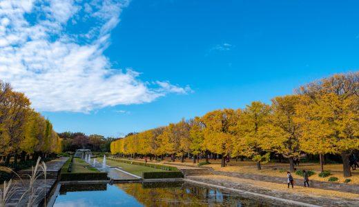 【昭和記念公園(秋編)】カエデとイチョウのそろい踏み!一度で2度おいしい紅葉撮影スポット!
