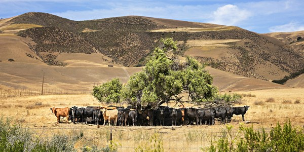 Severe heatwaves show the need to adapt livestock management for climate