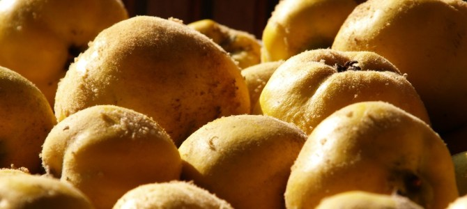 Foraging Recipes – Quince