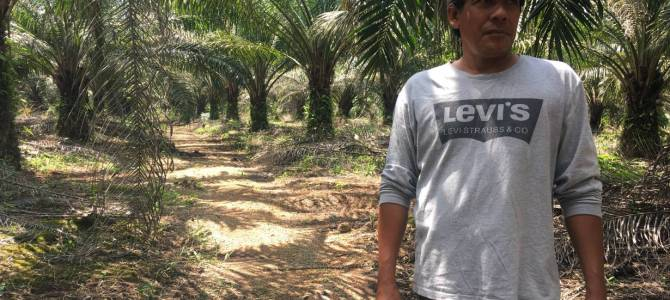 Too late to plant green seed among world's forgotten palm oil farmers?