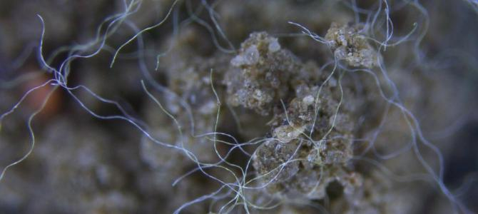 Dangerous for soil? First experimental study on the influence of micro-plastics on soil & its micro-organisms