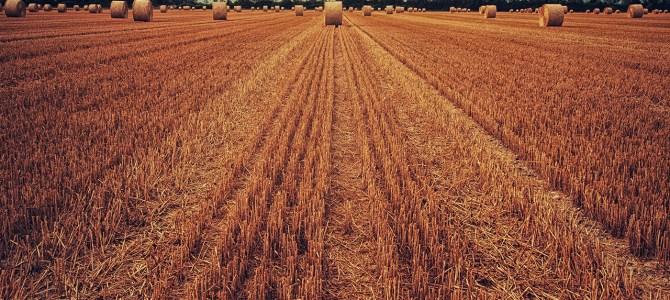 British farms failing modern slavery test, says watchdog