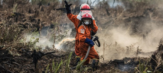 Deforestation-linked palm oil still finding its way into top consumer brands: report