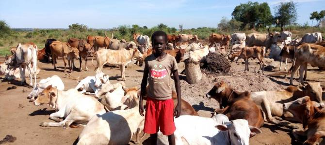 Forecasting trouble: How South Sudan's weather service is failing farmers