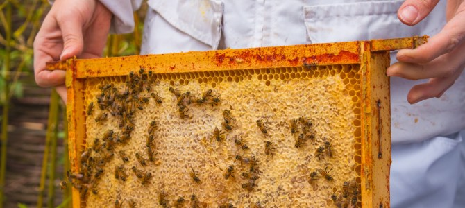 Bees for Business named as world's first Carbon Neutral bee farm