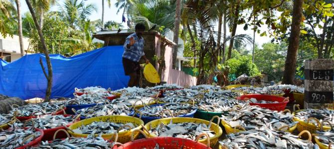 Warming waters heat up fishing costs along India's Malabar Coast