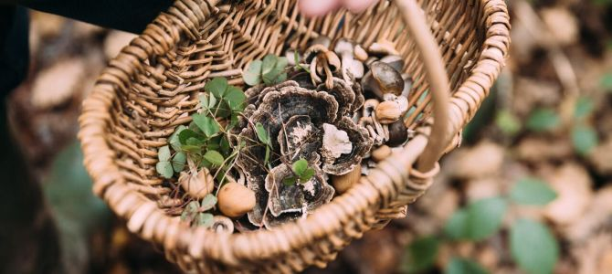 Mushroom Forage & Cookery, Peak District